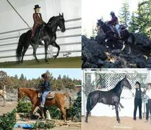 horse training, riding lessons, Bend, Oregon